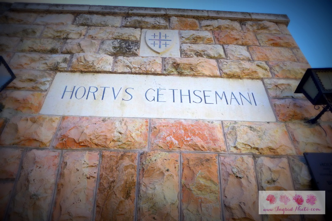 """Gethsemani means """"oil press"""" in Hebrew. It is located at the Mount of Olives and stands next to the Church of All Nations, which houses the rock where Jesus is believed to have prayed in agony."""
